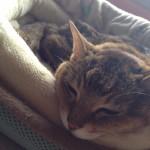 先月亡くなった親戚の猫