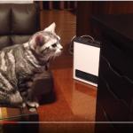 ある猫の哀歌